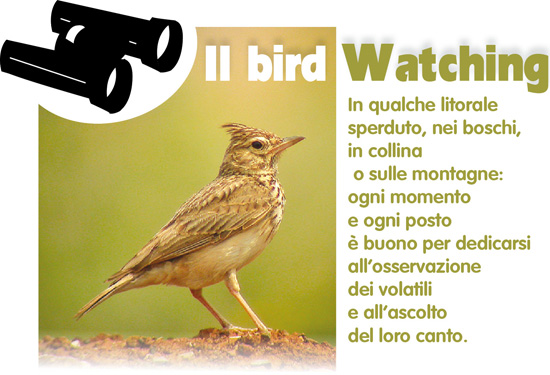 bird%20watching%201.jpg