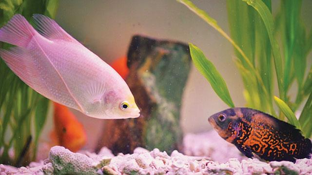 pesci in un acquario con piante, rocce e ambiente