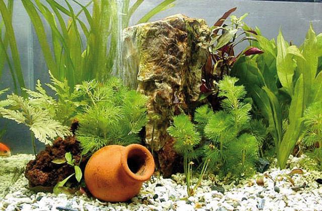 piante in acquario come fare