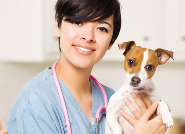 Controllo del cane dal veterinario per le zecche