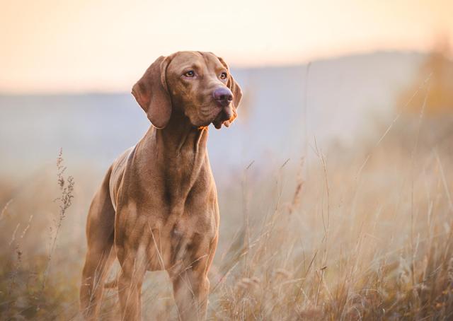 postura-del-cane