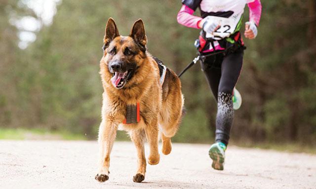 cane corre con il padrone