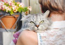 Gatto sulla spalla della padrona