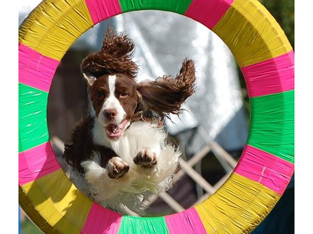 cane-agility-dog-importante-per-attività-fisica