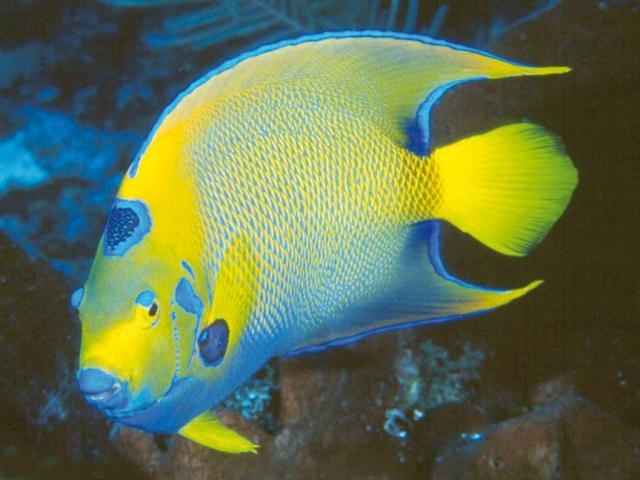 I-pesci-da-scegliere-per-l'acquario