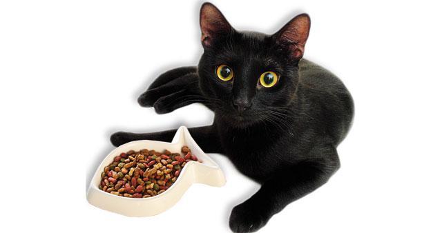 dieta per gatti con problemi renali