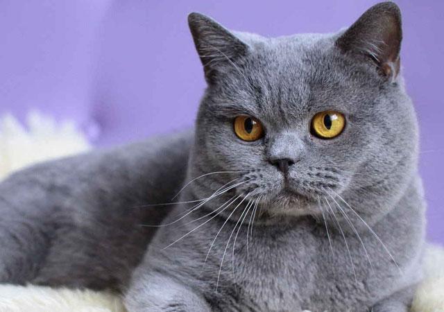 british-rubrica-il-veterinario-risponde