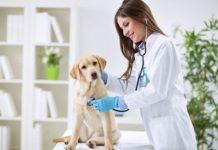 Cane-visita-dal-veterinario