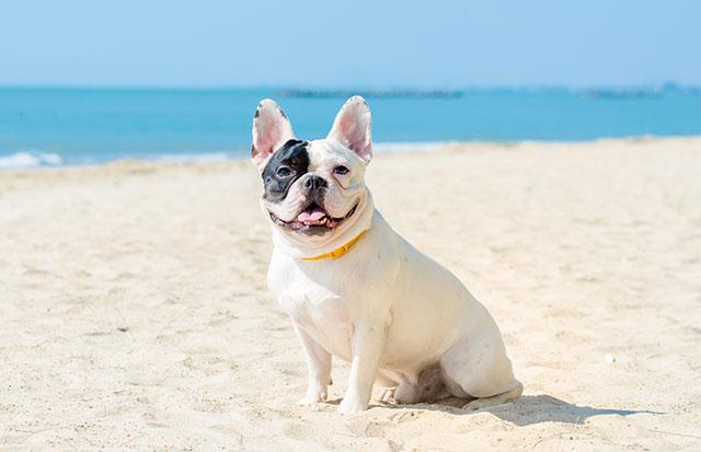 Cane-divieti-di-portarli-in-spiaggia