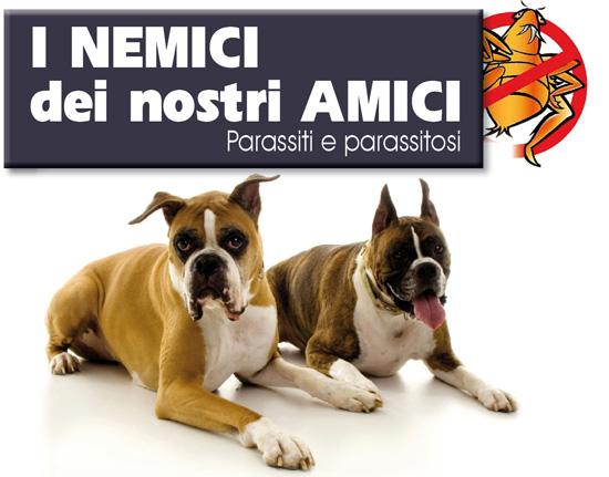 /website/data/picture/img_art_0510/parassiti%201.jpg