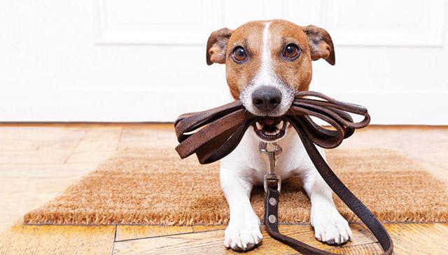 cane con il guinzaglio pronto per uscire