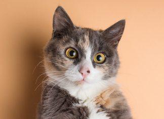 Gatto-impaurito-stressato
