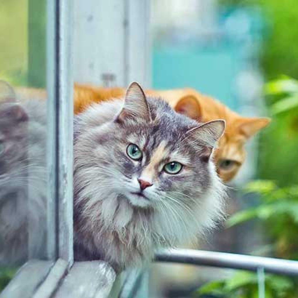 prodotti pet ecosostenibili gatto natura