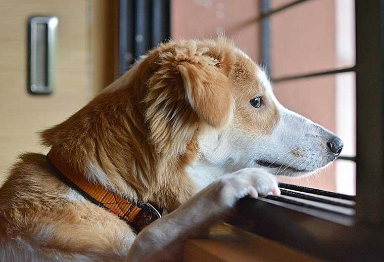 come educare un cane finestra
