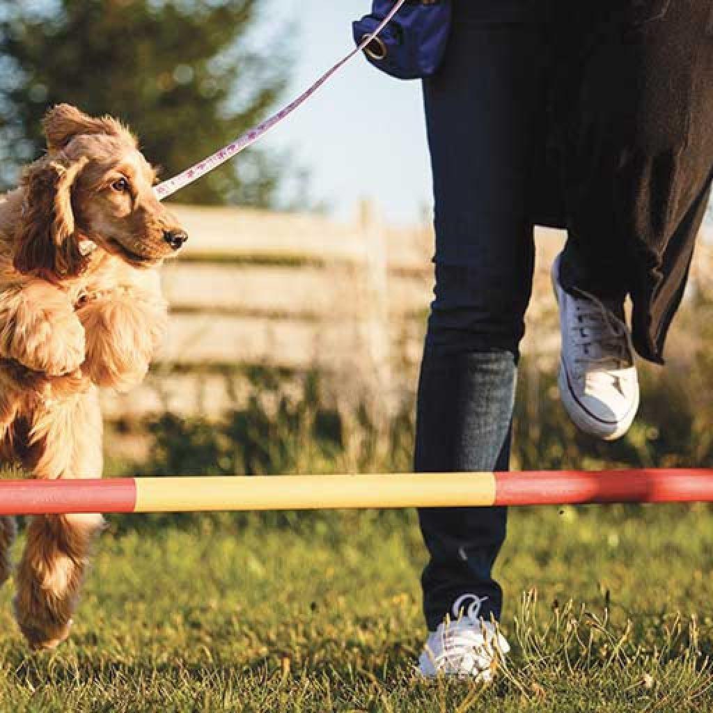 sport cinofili agility dog