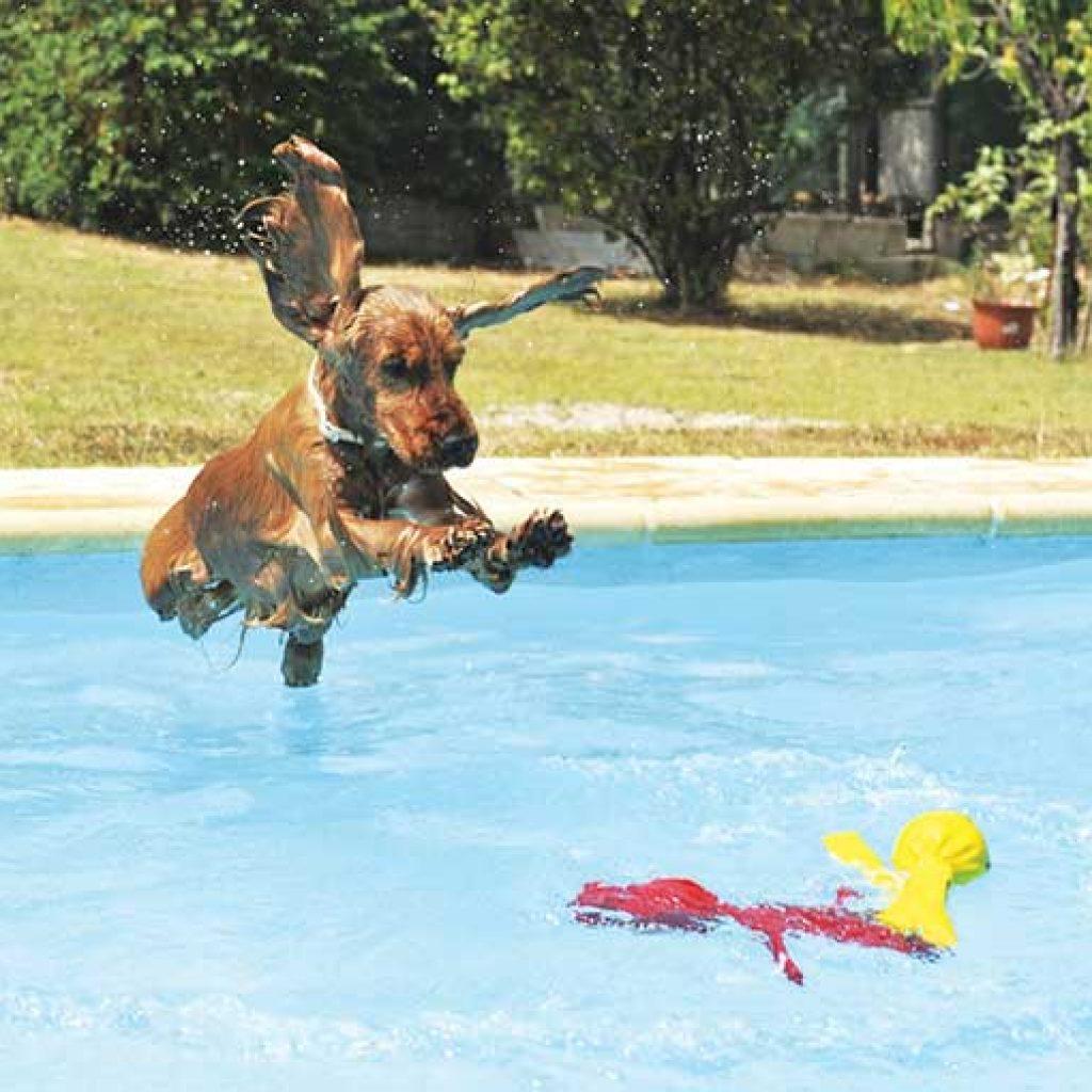 sport cinofili piscina
