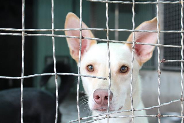 associazione per cani abbandonati
