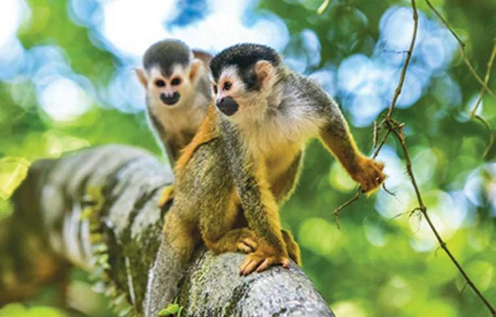 scimmie-in-liberta