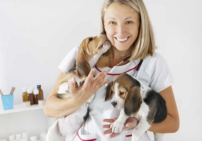 FNOVI ricetta elettronica veterinario
