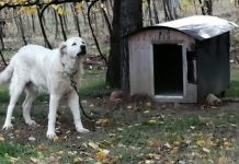 cane-legato-catena