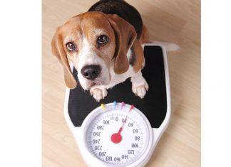 cane-obeso-sulla-bilancia
