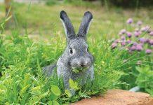 alimentazione-coniglio-prato-erba-pranzo