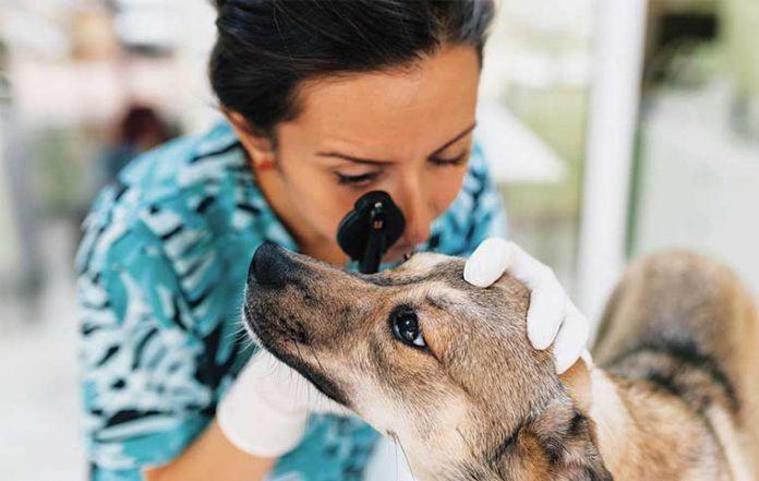 veterinario-curare-occhio-vista-cane-gatto