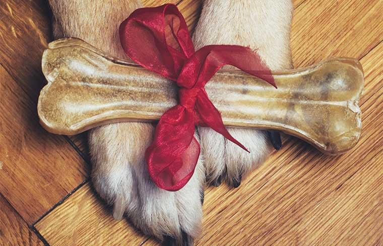 Cane-osso-regalo-natale