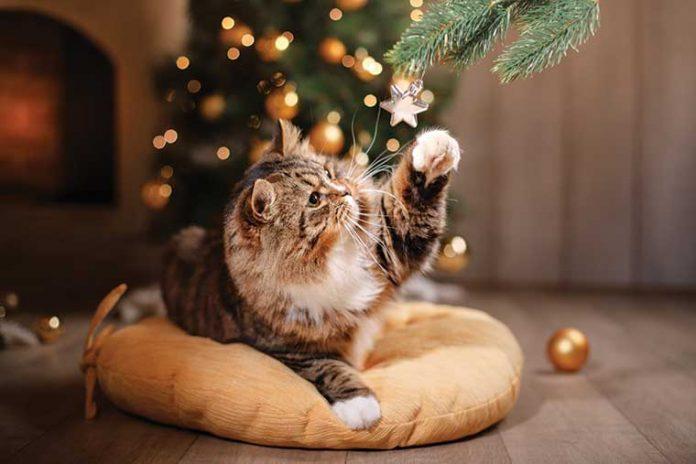 gatto-prodotti-nutracegenici