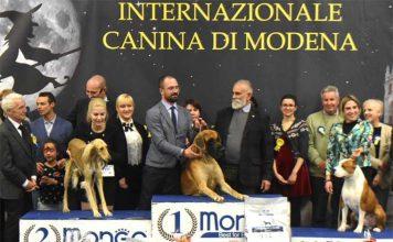 premiazione mostra internazionale canina di modena