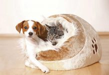 cane-gatt-nella-cuccia-assieme-amore