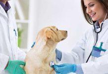 veterinari-controllo-prevenzione-cane