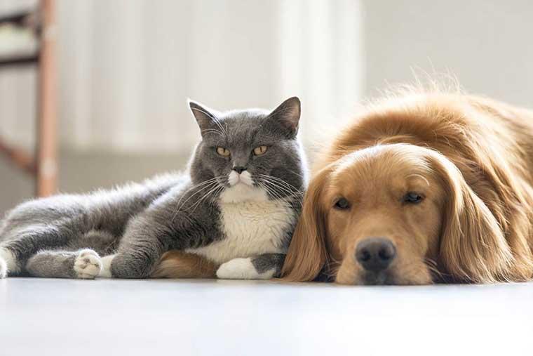 cane e gatto amici insieme coccole