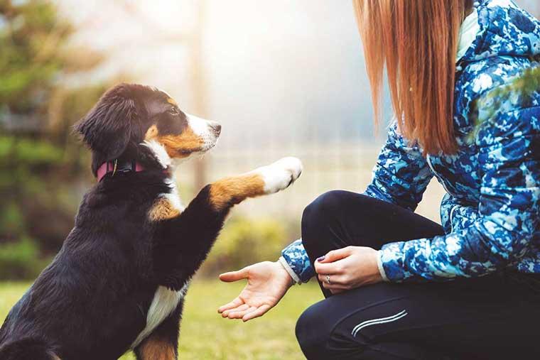 Cucciolo-educazione-porge-la-zampa