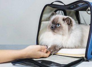 Abituare-il-gatto-al-trasportino-come -farlo-amare
