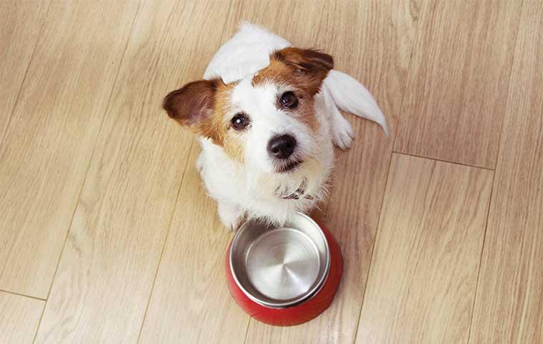 cane con la ciotola in attesa del pasto food