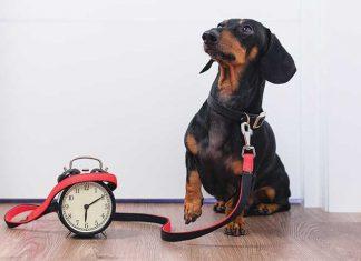 cane-in-attesa-con-orologio