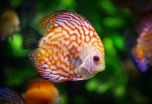 acquario-senza-segreti