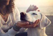 amore-pet