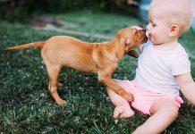 cane-amore-bambini