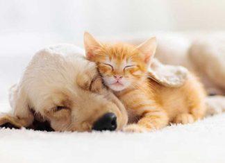 cane e gatto che dormono insieme patologie nasali