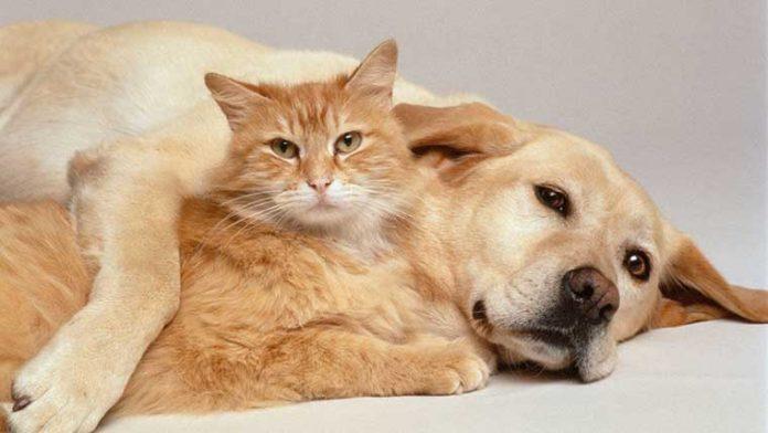 assieme cane e gatto per il superfood
