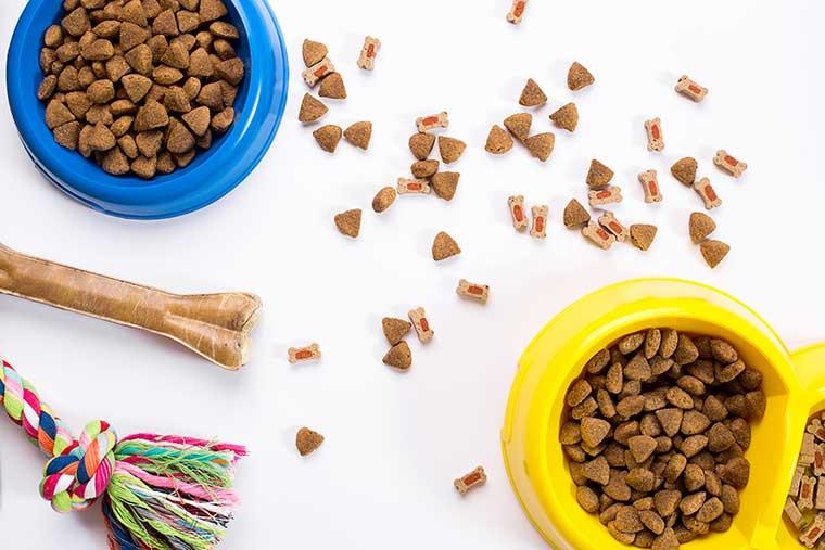 crocchette per il superfood omega 3 per i nostri pet cane e gatto