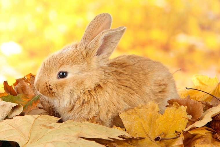 Malattie coniglio batteriche virali