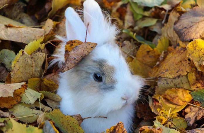 Coniglio-tra-le-foglie-rogna