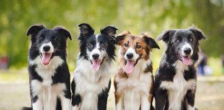 gruppo-cani-apprendimento