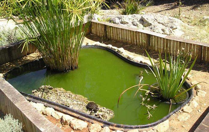 laghetto-da-giardino-per-tartarughe
