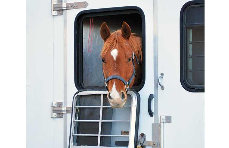 Trasporto cavallo
