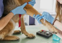 prelivo del sangue al cane per controllo