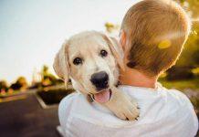 cucciolo-in-braccio-alla-padrona